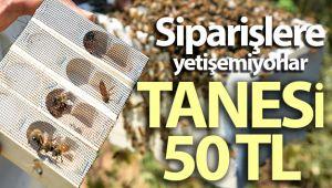 Bitlis'te üretilen ana arılar tüm Türkiye'ye satılıyor
