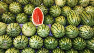 Adana'da karpuz ekimi yapıldı