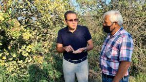 Fıstık kenti olma yolunda ilerleyen Karabük'te hedef yüksek rekolte